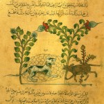 Cat in Arabic Script from 1350