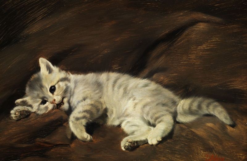 Grey Kitten Julius Adam II Private Collection