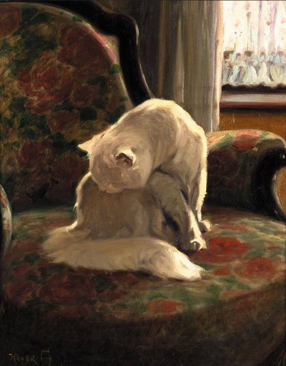 Angora on a Chair Private Collection