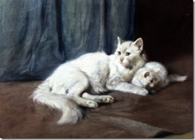 White Persian Cat and Kitten Private Collection