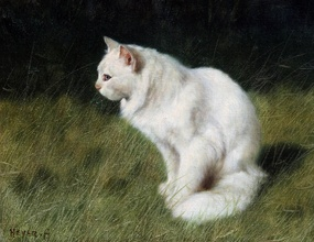 White Cat in Tall Grass Oil on Canvas Private Collection