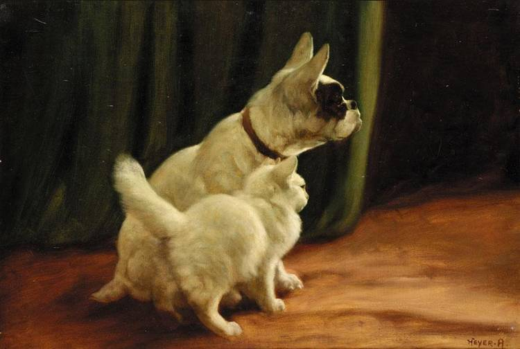 Cat and Dog Private Collection