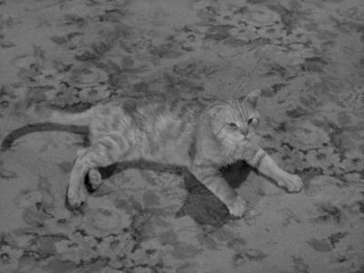 cats in film, Miss Paisley's cat