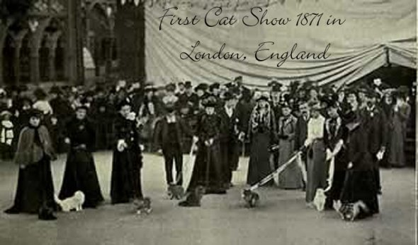 Cats In The 19th Century Part 2 First Cat Show The