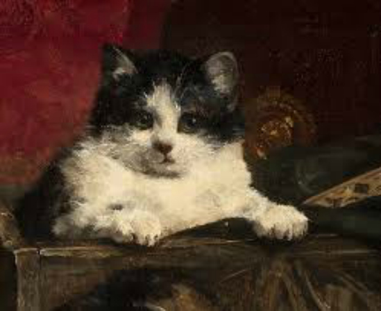 black and white kitten Charles Van den Eycken private collection