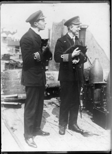 WWI 1918 Mascots of the Vindictive, a British warship damaged in Zeebrugge and back at Dover. cat in 20th century history, ships cats, WWI cats