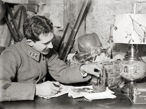 WWI A French soldier with his kittens on the Western Front, Argonne 1916 cat in 20th century history