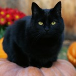 Myths and Superstitions: Halloween and Black Cats