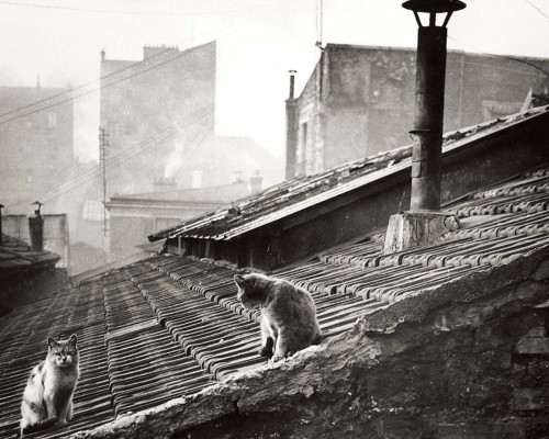 Édouard Boubat Cats on a roof in Paris. 1947