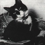 Cats in the 20th Century (Cats in War-Simon)