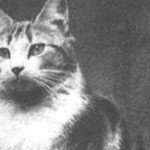 Cats in 20th Century History (Cats in War-Faith the Church Cat)