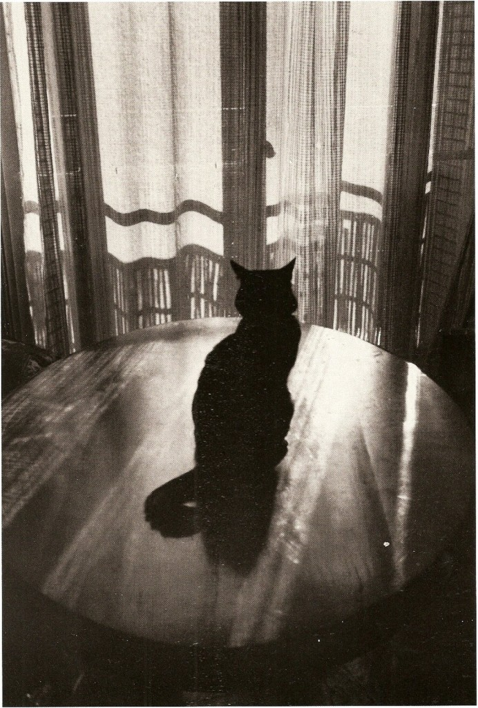 Windows and cat (By Edouard Boubat)