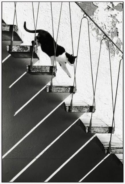 Boubat cat on the stairs, cats in photographs
