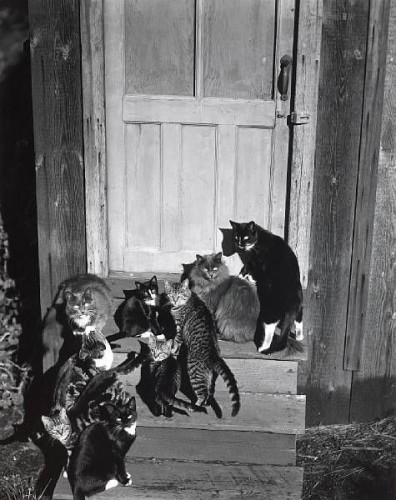 Cats at the Door, the cat in photography, cats in photos