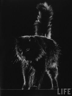 Gjon MIli's cat Blackie 1943, cats in photography, famous cats