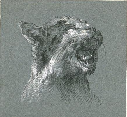 Jean Baptiste Oudry, Head of a Cat Meowing