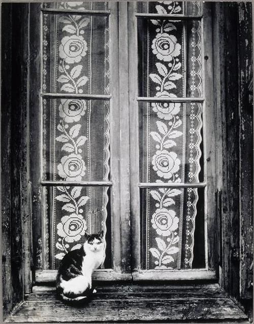 Cat on a Windowsill 1953, cat photography