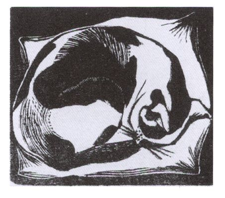J. Nash, Cat Asleep