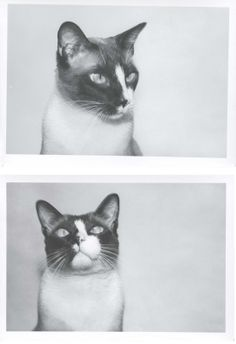 Andy Warhol, Photo of Cat 1976