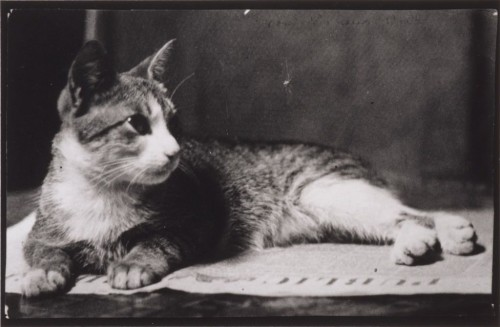 Mrs. Thomas Eakins's Cat, ca. 1880-90