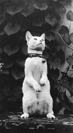 Thomas Eakins cat Sitting Up