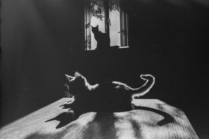 Willy Ronis, Chats Paris, cats Paris