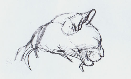 Study of a Cat's Head, Theophile Steinlen