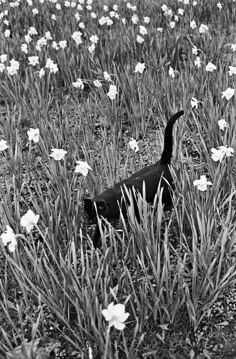 1982 Cat in Flowers, Ferdinando Scianna Paris