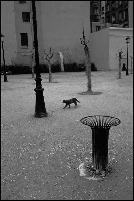 Black Cat Ferdinando Scianna 1977 Paris