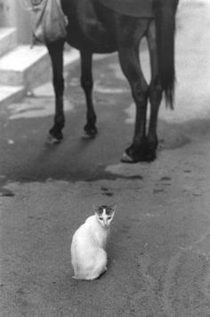 Cat and Horse, Ferdinando Scianna 1982