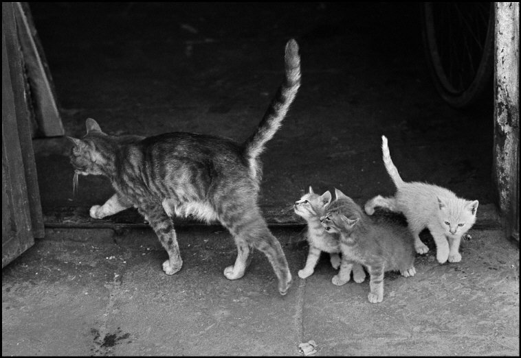 Cat and Kittens, Ferdinando Scianna Sicily 1983