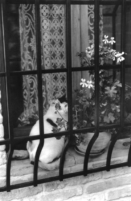 Cat in Window, 1995 Ferdinando Scianna