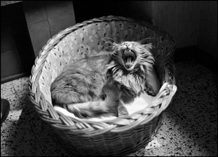 Cat in a Basket, Ferdinando Scianna