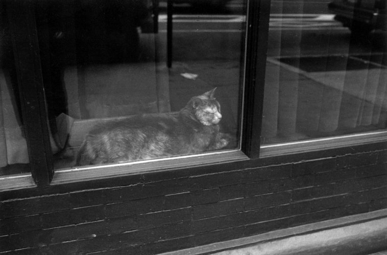 Cat in a Window, 2002 Ferdinando Scianna