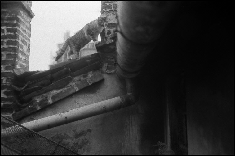 Cat on a Roof, 1982 Milan Ferdinando Scianna