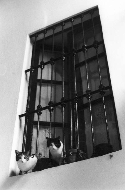 Ferdinando Sicanna Cats Looking Down from a Window 1986
