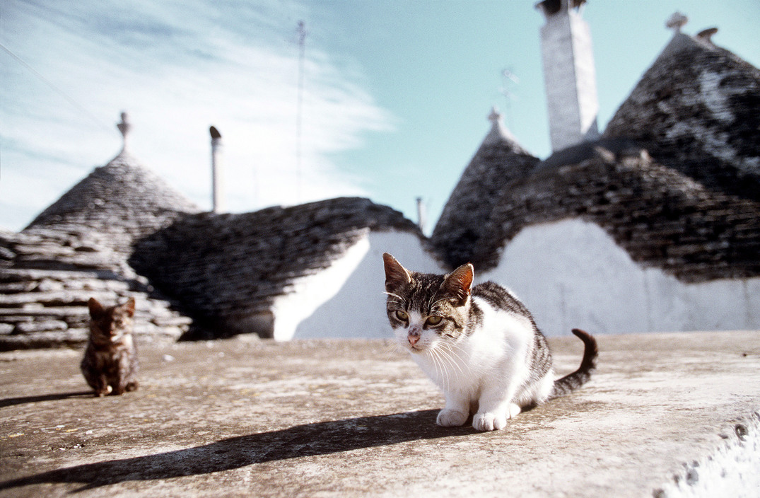 Little cats in Alberobello. 1990 Ferdinando Scianna