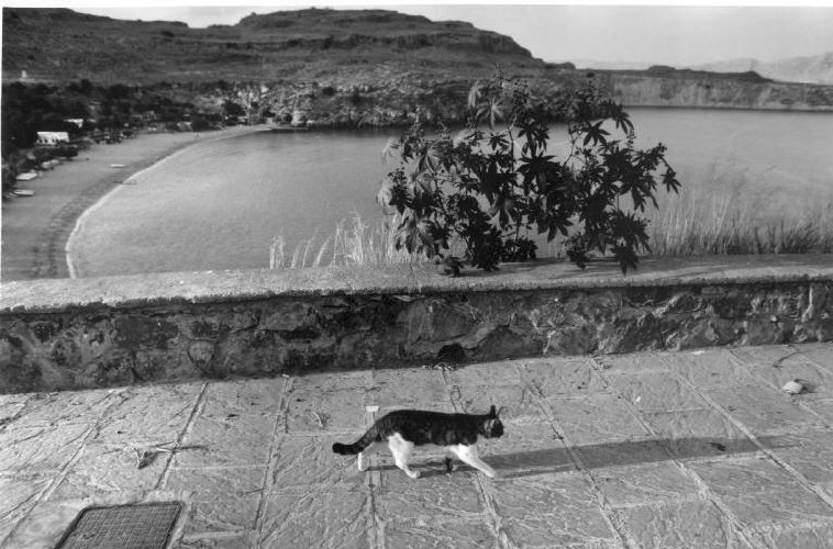 Prowling Cat, Greece, 1999 Ferdinando Scianna
