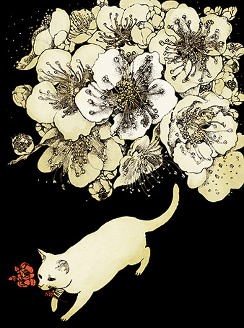 Midori Yamada5-white cat on black background