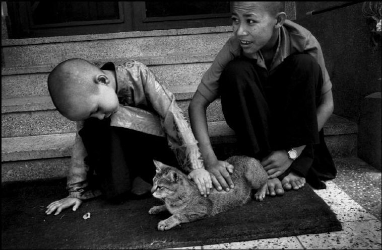 Playing with a Cat with his Young Attendant, Nawang, 16 years old Martine Franck