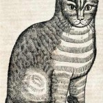 Cat From Edward Topsell's Four Footed Beasts, cat in middle ages art