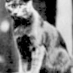 felines in film, cats in film, Pepper