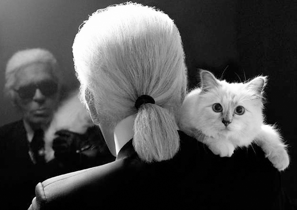 Famous Cat Lovers Fashion Celebrities