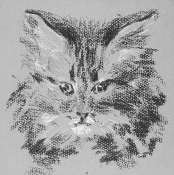 Remedios Varo, Cat