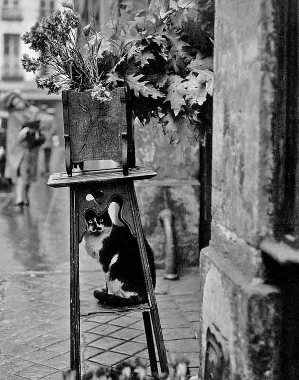 Black and White Cat 1953, Robert Doisneau