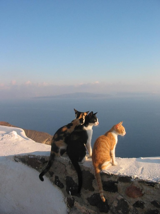 Aegean cats (source unknown)