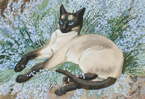 Siamese Cat, Charles F. Tunnicliffe