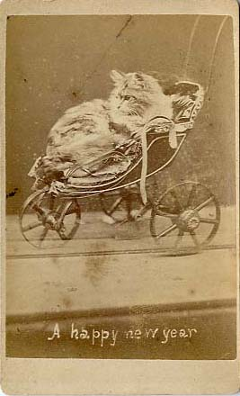 Cat in Toy Pram Brighton Cat Series, Harry Pointer