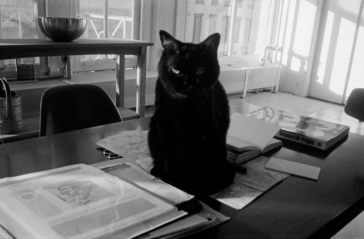 Walker Evans, Black Cat