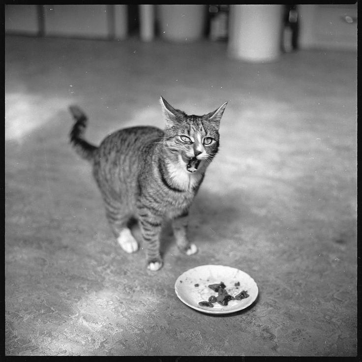 Walker Evans, Cat Eating